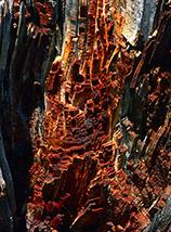 """""""Grattacieli"""" (particolare di un tronco bruciato in Val Chiara)."""