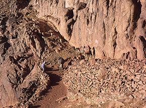 """""""Capolinea"""" (cammelli al termine della pista per Monte Mosè, alla base della Parete Est)."""